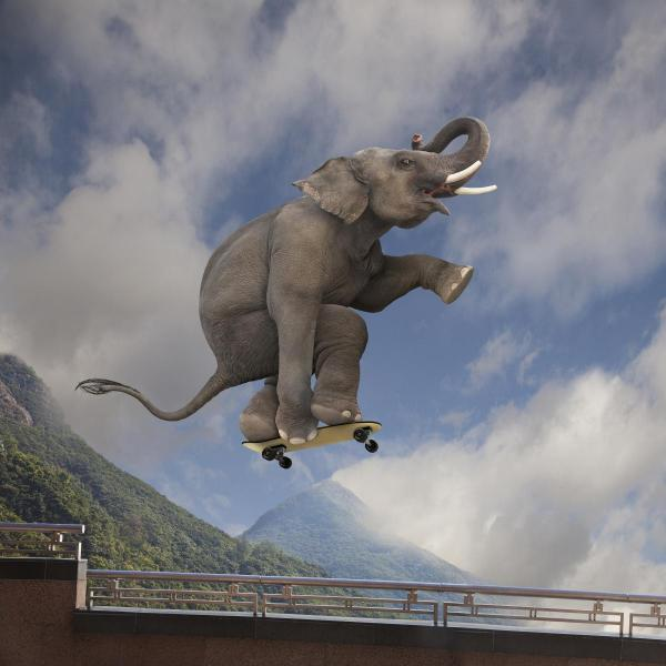 elephant_skateboarding